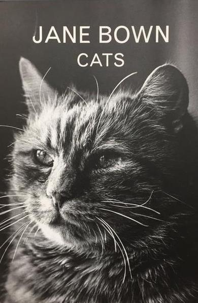FLOW'S Book du Jour: Jane Brown | Cats